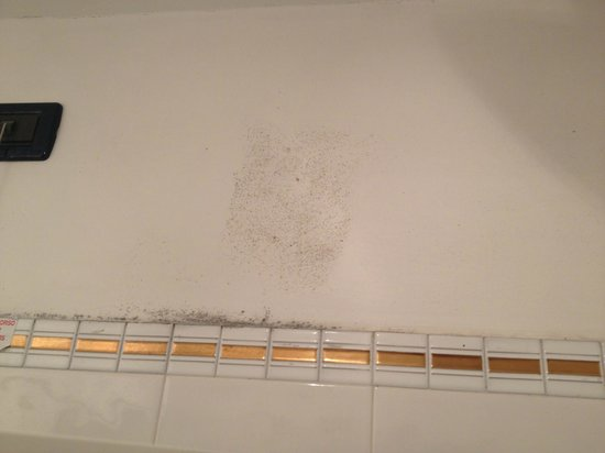 Atlanta Augustus: mould on bathroom in the shower!