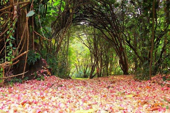 Delfim Moreira, MG: Garden
