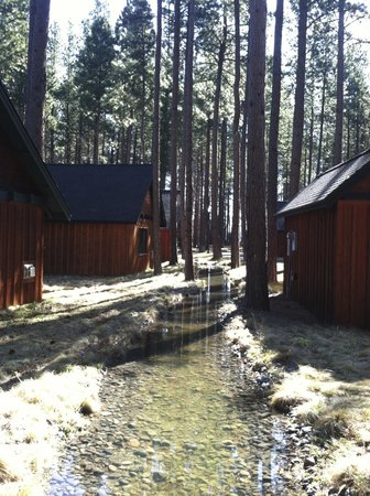 Five Pine Lodge & Spa: Cabins & Trees along stream