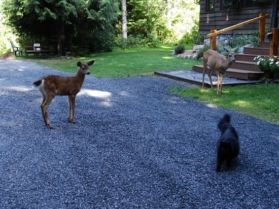 Stormking Spa at Mt. Rainier: Deer with fawn and Ms. Shadow