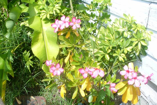 Farley Hill National Park: Shrubs in Flower