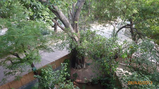 Saubhag Bed and Breakfast: View from the balcony