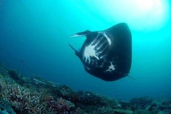 Matava - Fiji's Premier Eco Adventure Resort: Diving Manta Reef