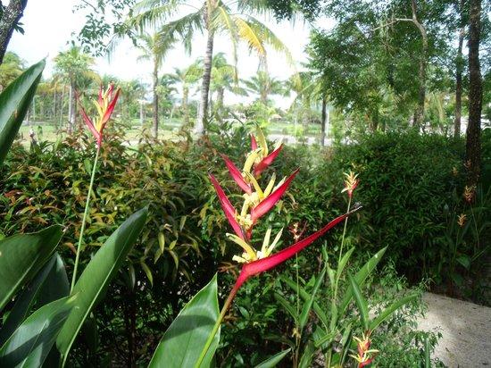 Angsana Villas Resort Phuket : Villa gardens