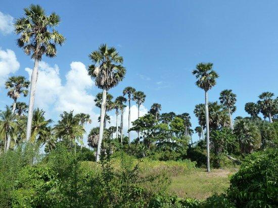 The Manta Resort: tropical paradise