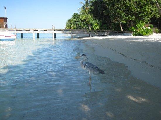 Vilamendhoo Island Resort & Spa: nuestra amiguita
