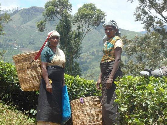 Ceylon Tea Trails : A short walk from our room