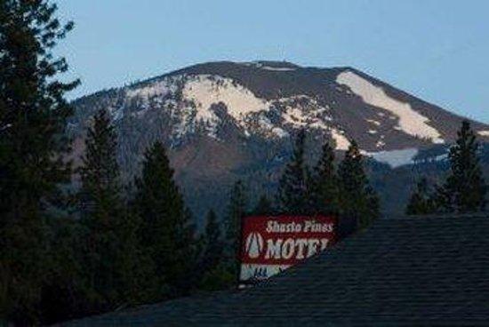 Shasta Pines Motel: Sign
