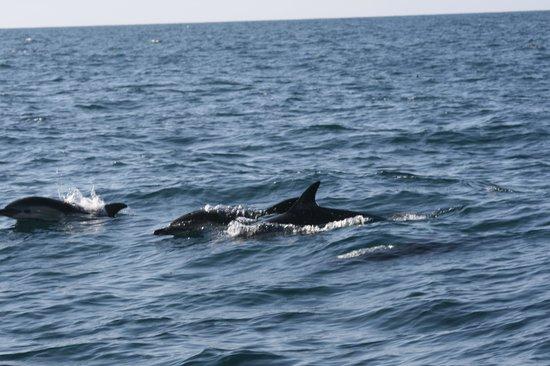 Cornish Sea Tours: Amazing dolphins