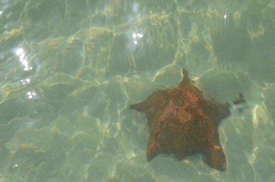 Playa Mariposa : saona piscine naturali