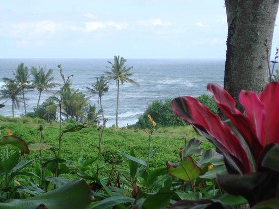 Gajah Mina Beach Resort: Les alentours