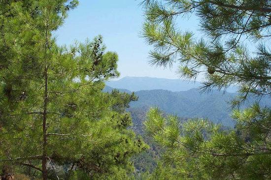 EcoTour Adventures Cyprus: Paphos Forest