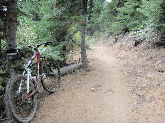 Cog Wild Mountain Bike Tours: World's Best Trails