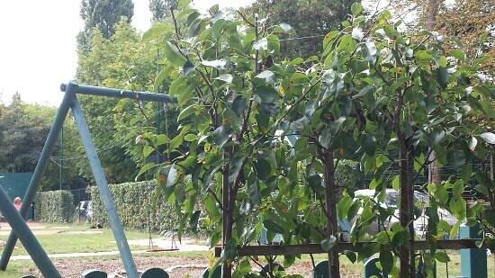 Le Fruit Defendu: jardin du verger