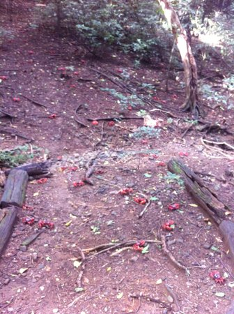 Christmas Island National Park: Carpet of Red Crabs