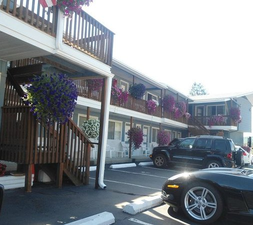 Lake Haven Motel: Look at all those petunias in excellent shape for August