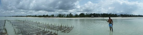 Ndame Beach Lodge Zanzibar: A view from the ocean back onto the beach