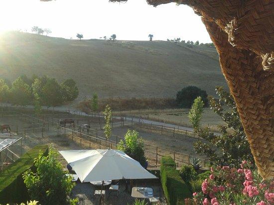 Hotel  Alavera de los Baños: View from a room onto the horse farm