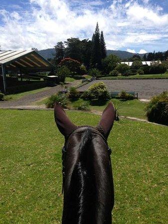 Academia de Equitacion El Cortijo