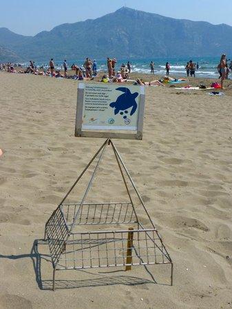 Iztuzu Beach: Turtles & tourists