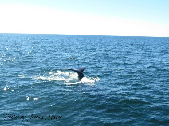 Hyannis Whale Watcher Cruises: Whales Tail