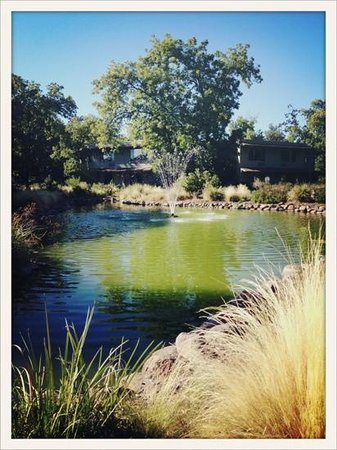 Gaia Hotel & Spa Redding, an Ascend Hotel Collection Member: grounds