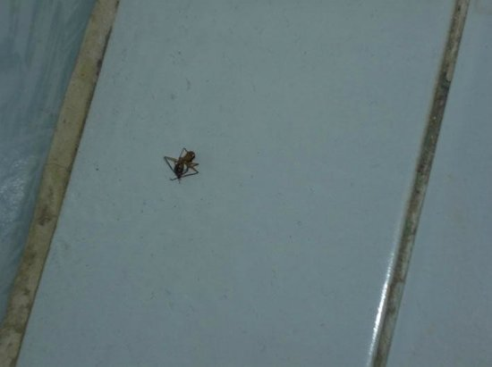 Halomy Hotel: Dead ant