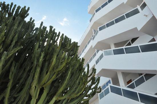 Apartamentos calma bewertungen fotos preisvergleich playa del ingl s spanien tripadvisor - Apartamentos calma playa del ingles ...