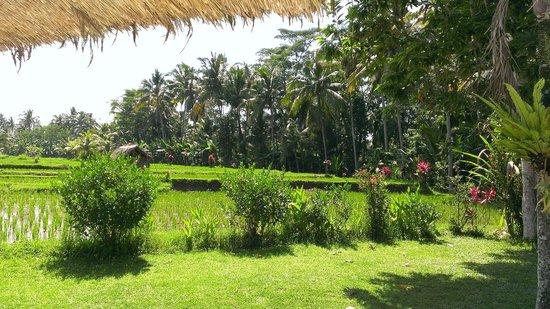 Spa Hati: プールからの風景