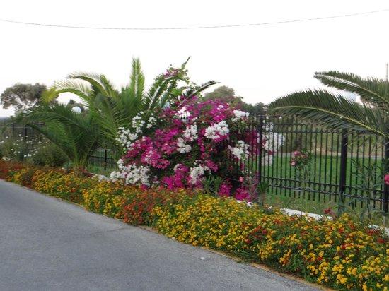 Chryssana Beach Hotel: Ухоженный сад в отеле
