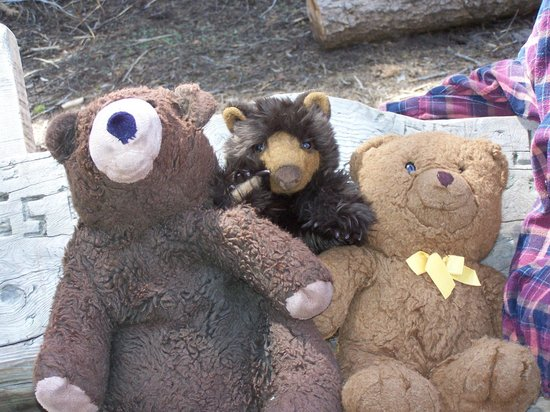 Rio Sierra Riverhouse: the Bears found a new friend !!