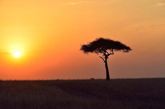 Mara Bushtops: Sunset over Mara