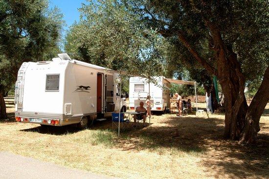 Camping Village Parco degli Ulivi: Camping
