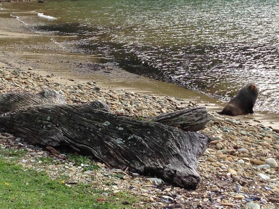 Queen Charlotte Track: Seal
