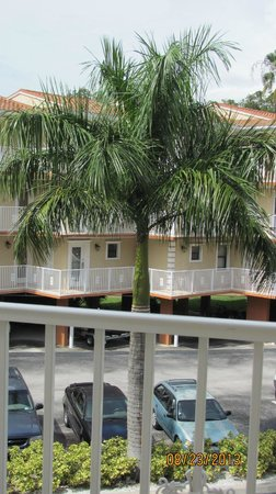Beso Del Sol Resort: Palm Tree, middle of parking lot