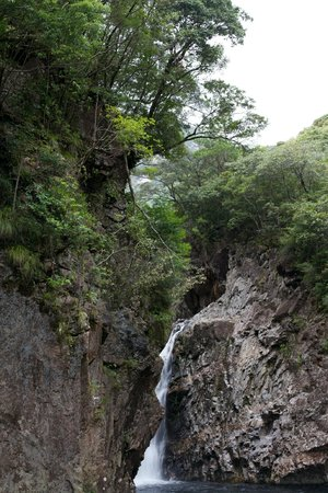 Yakushima Iwasaki Hotel: Waterfall in hotel grounds.  The grounds were beautifully maintains with many plants and trees l