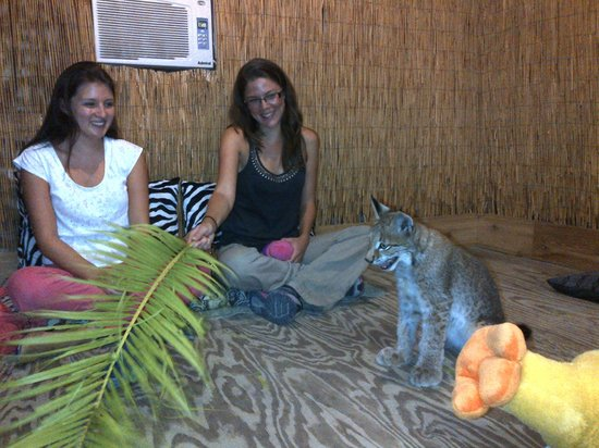expat dating in phnom penh