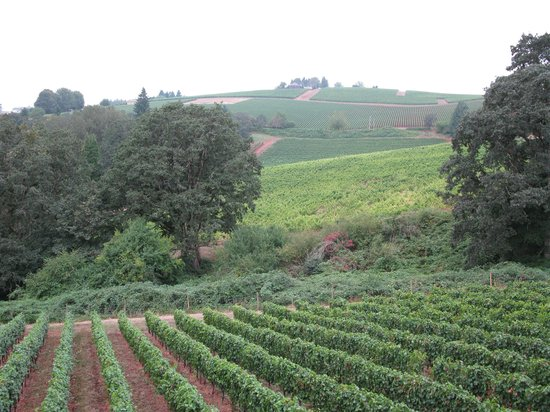 Backcountry Wine Tours : our view from lunch