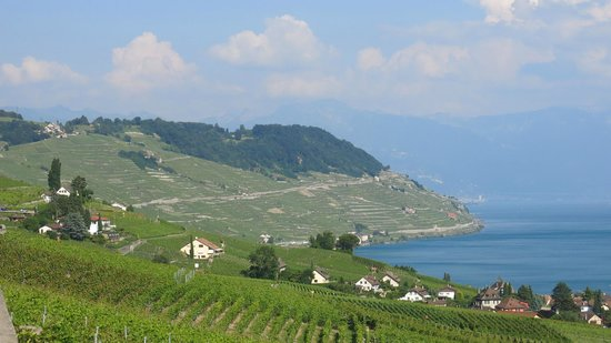 Corniche Lavaux Vineyards: views of vineyards and Montreux