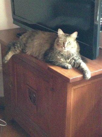 Hotel Alexander: la gatta socievole