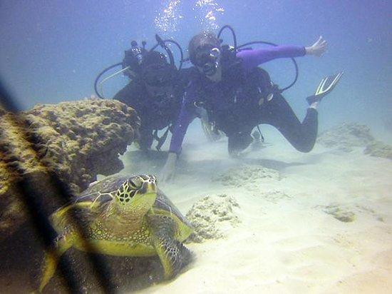Ocean Legends Dive Center: D, T and Turtle