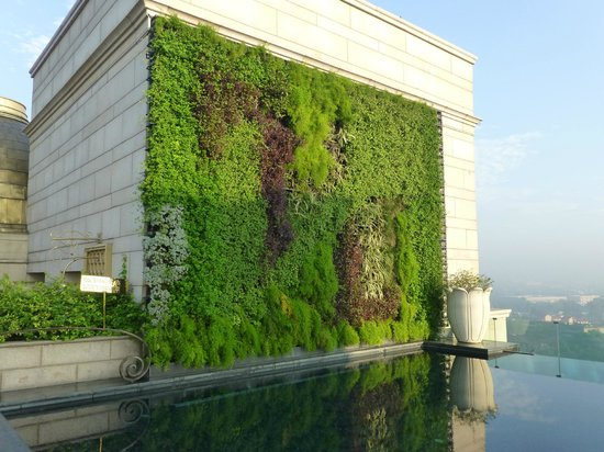 The Leela Palace New Delhi : Living wall by the pool