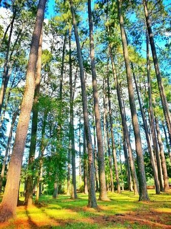 Sesquicentennial State Park: through the trees
