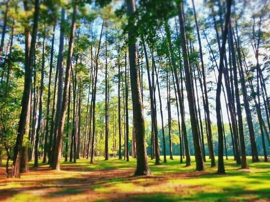 Sesquicentennial State Park: beauty