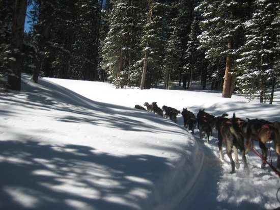 Monarch Dog Sled Rides: Monarch dog sled ride