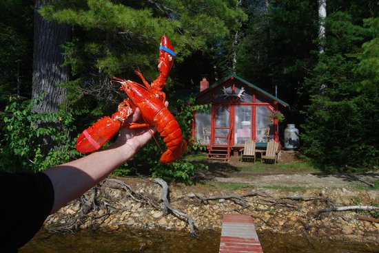 Spencer Pond Camps: Our Lobster/Our Cabin