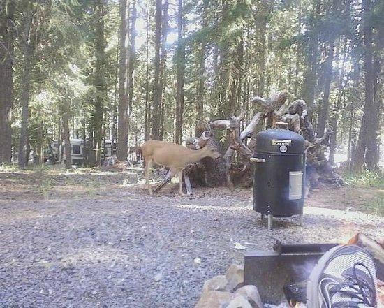 Howard Prairie Lake: deer