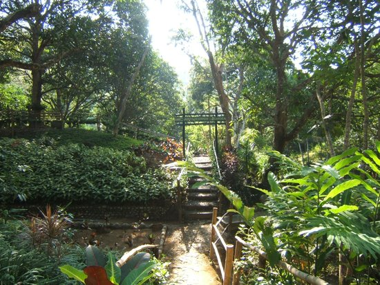 One of the Seven Gardens - Picture of La Union Botanical Garden, San ...
