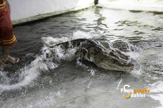 Crocodile & Snake Show Koh Chang: Crocodile Show Koh Chang