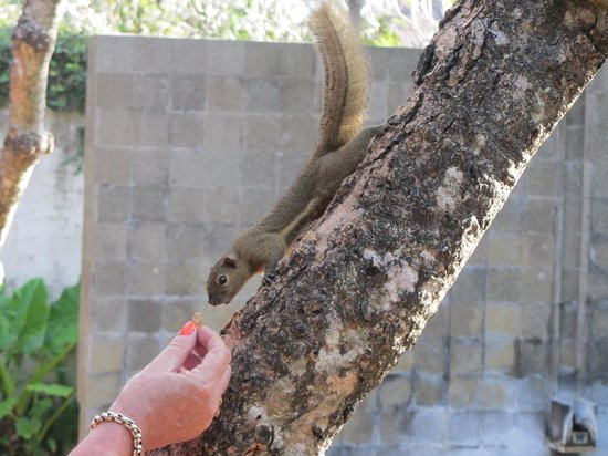Kayumanis Nusa Dua Private Villa & Spa: And wildlife to entertain